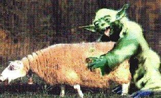 Yoda having sex with a sheep